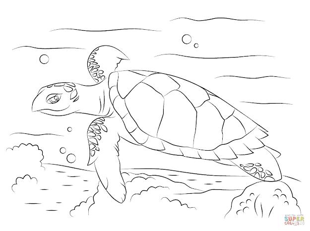 Cute Hawksbill Sea Turtle