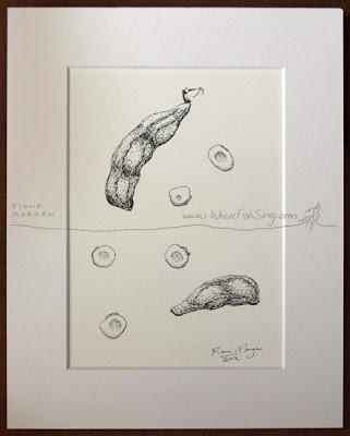 Minimalist black and white pen studies of beans by Australian artist Fiona Morgan
