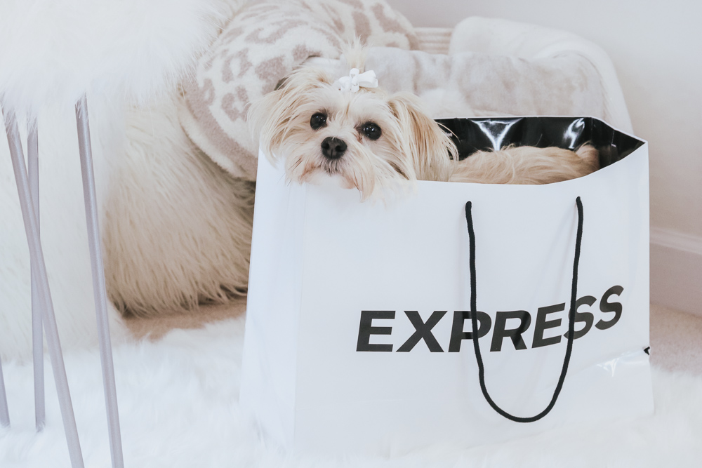 morkie inside express bag