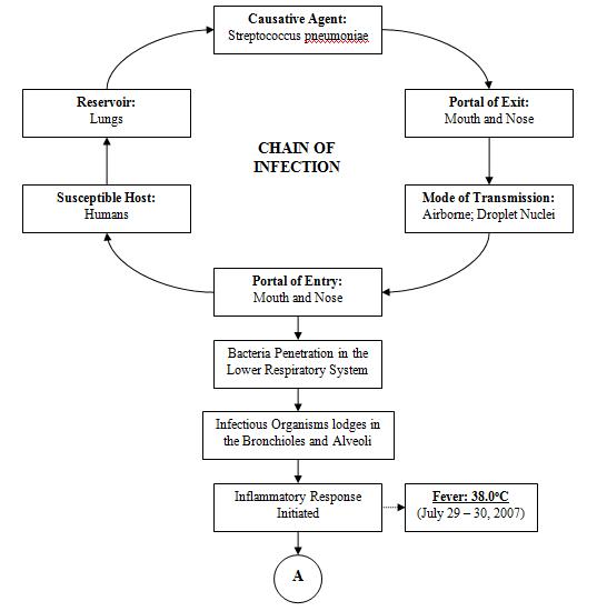 Pathophysiology Of Pneumonia Diagram Form – Periodic