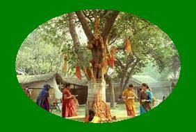 आइये जानते है कि शनिवार को पीपल की पूजा क्यों करनी चाहिए? Saturday ko pipal puja kyo hoti hai?