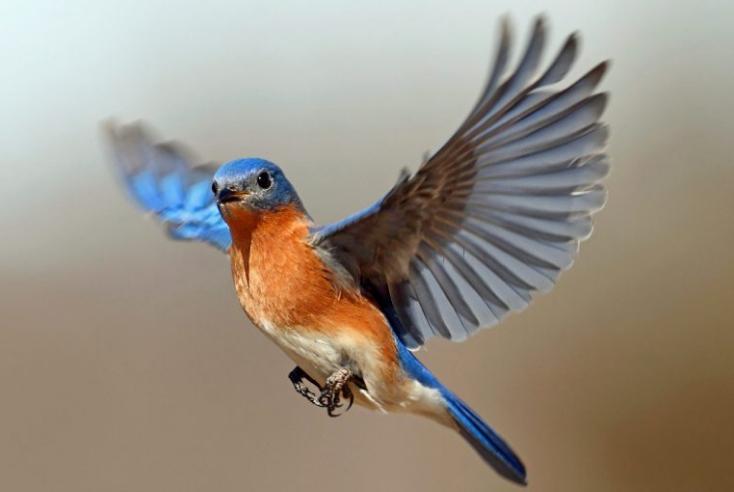 Come si orientano gli uccelli quando volano: nuova scoperta in Biologia.
