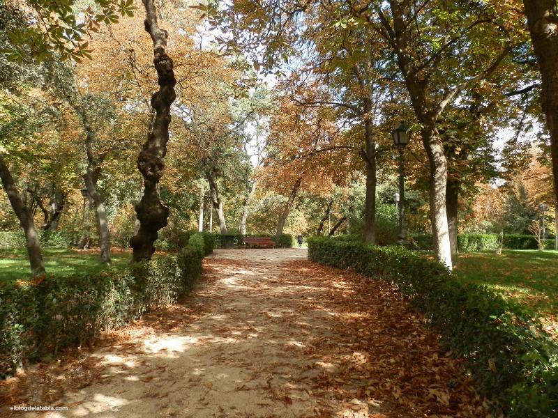 Árboles en el Retiro de Madrid
