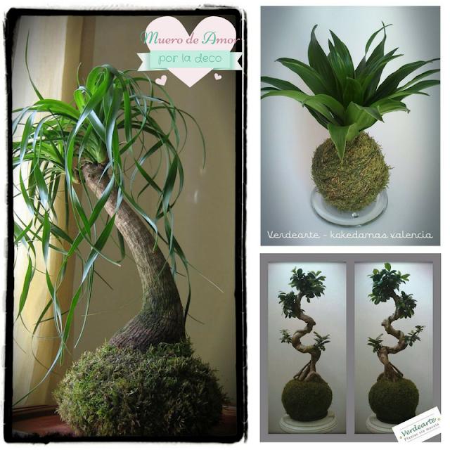 Plantas naturales sin maceta de VERDEARTE-By Ana Oval-2