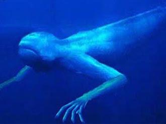 Fotógrafo de Nat Geo Revela haber encontrado seres extraterrestres bajo el agua