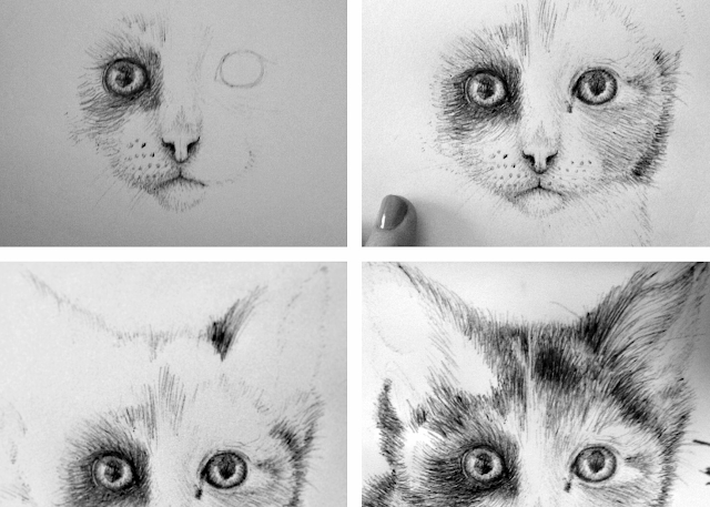 Art Cat Biro Illustration Sketch