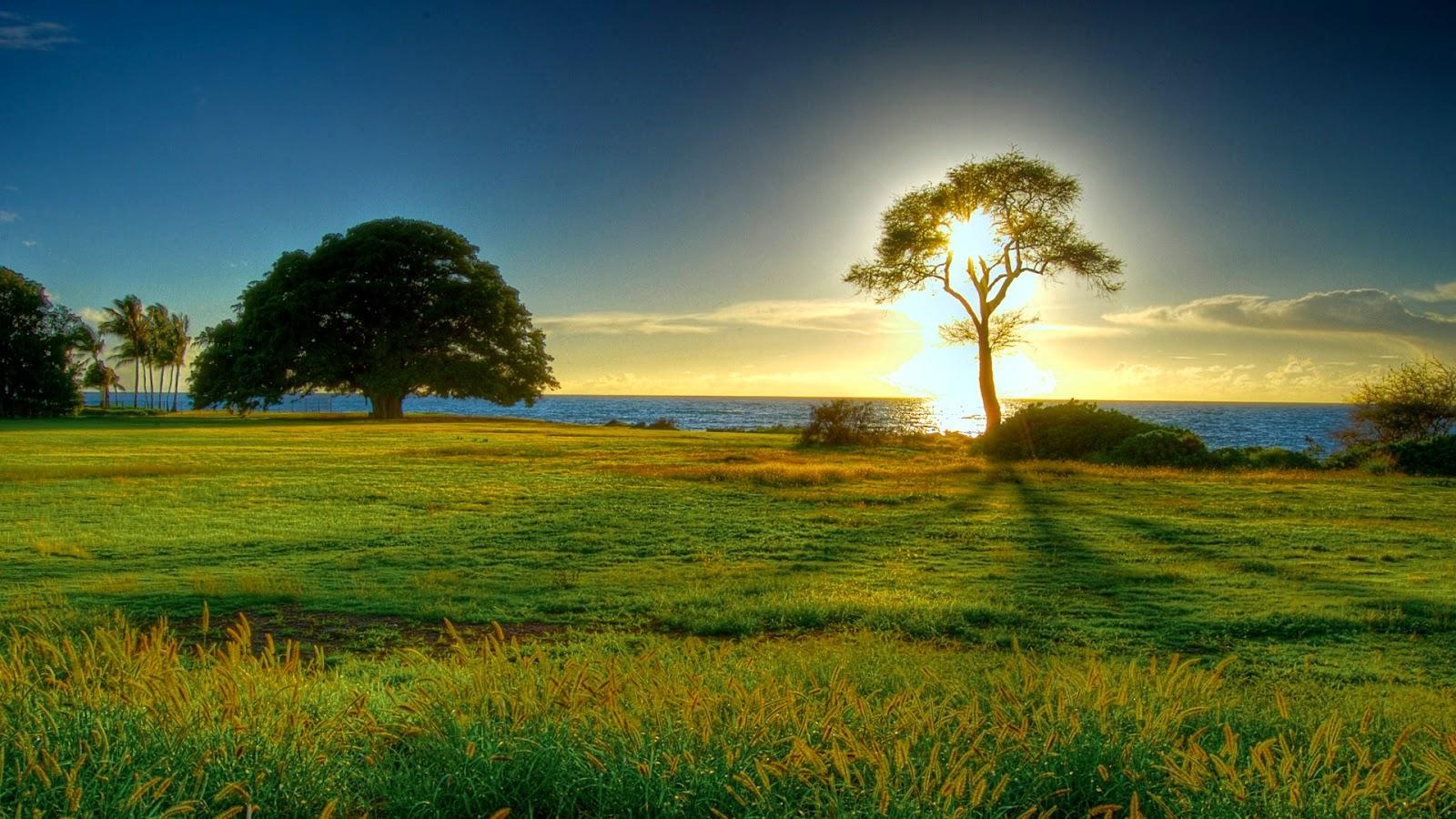 Natural Sunset HD Wallpaper | WallpaperPiece