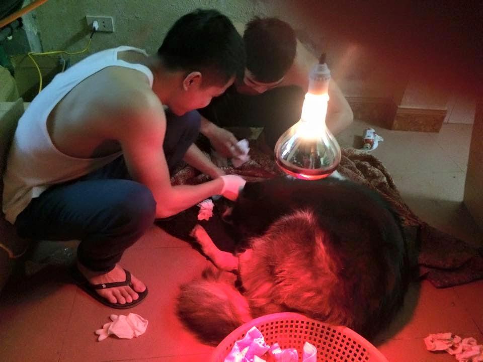 Quá trình đỡ đẻ cho cún mẹ