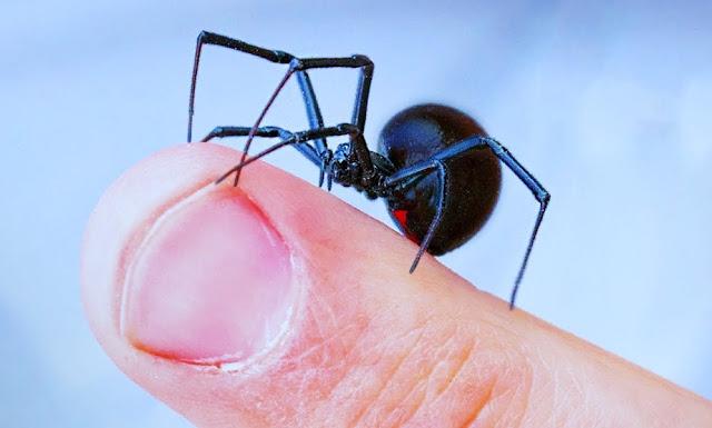 Pasos para prevenir una mordedura de araña