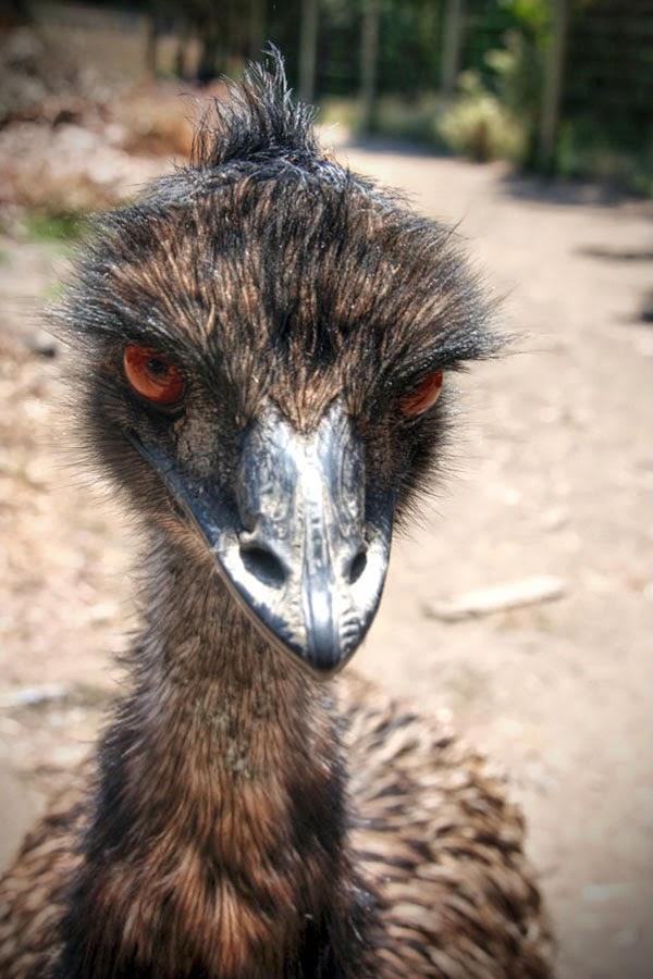 Always Drunk Placeholder Crazy Emu