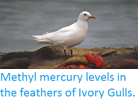 https://sciencythoughts.blogspot.com/2015/03/methyl-mercury-levels-in-feathers-of.html