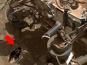 火星のゴキブリ(素材使用)