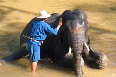 Chiang Dao Elephant Training Center - Chiang Dao - Chiang Mai - Thailand