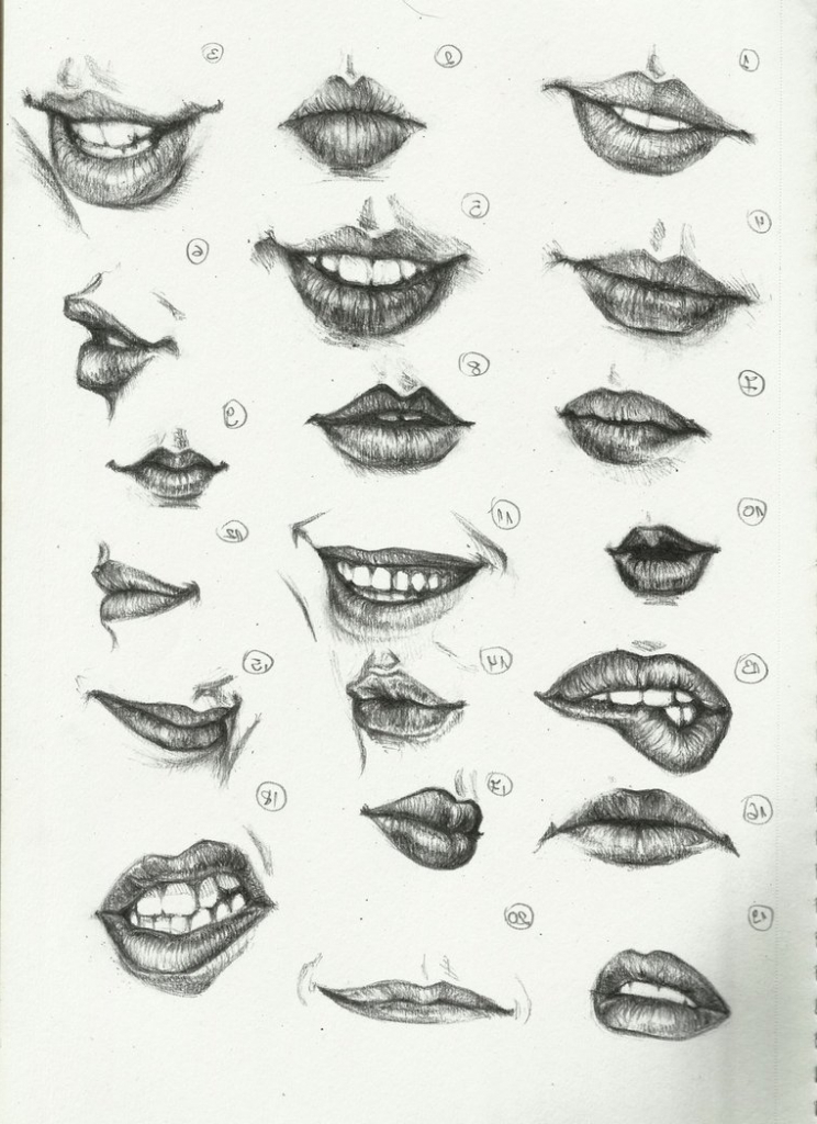draw with the anatomy of human face learn new things