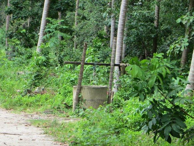 колодец в джунглях