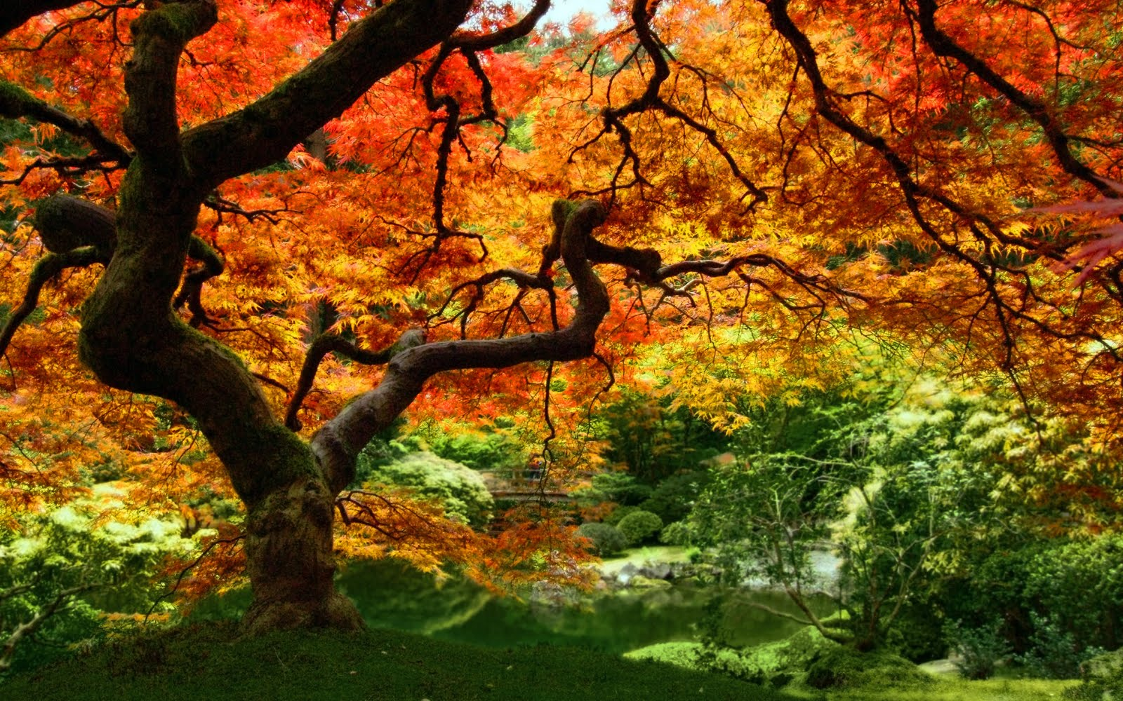 autumn leaf tree forest -#main