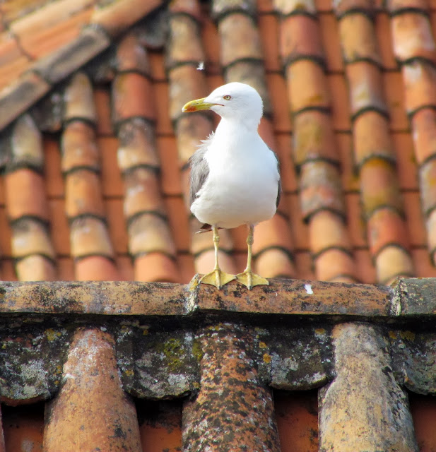 seagull in the roof