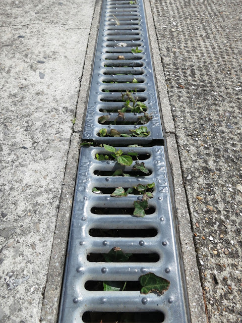 Small plants growing up through holes in long grid covering drain in pavement.