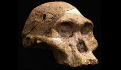 Penemuan Manusia Prasejarah di Indonesia