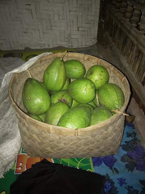 big avocado