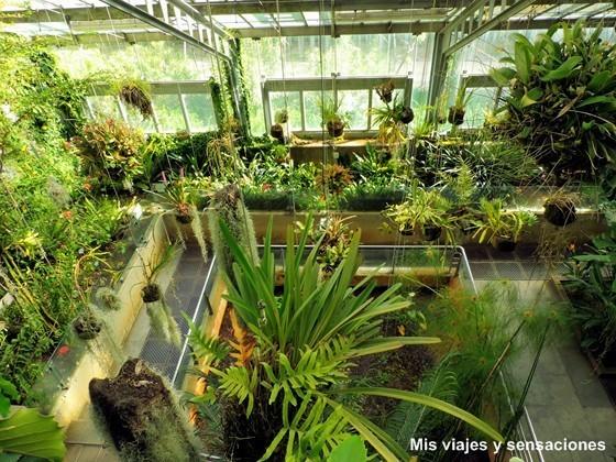 Invernadero, Real Jardín Botánico de Madrid