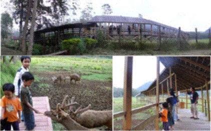 pemberian makan rusa