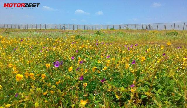 Kas Plateau Pathar Satara flowers