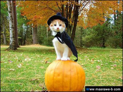 صور صور قطط كيوت 2020 خلفيات قطط جميلة جدا cats43.png