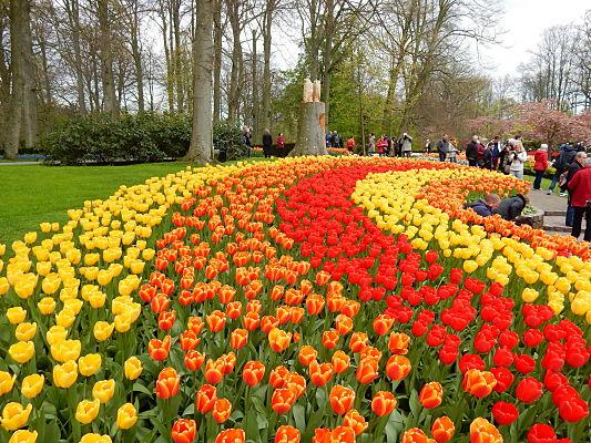 dicas viagem jardim tulipas amsterdam