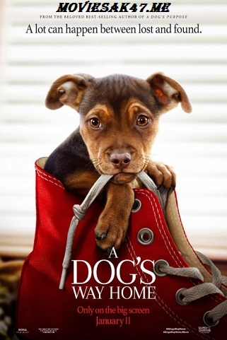 A Dogs Way Home (2019) HDRip Full English Movie 480p & 720p