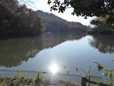 白旗池のほとり ベンチ