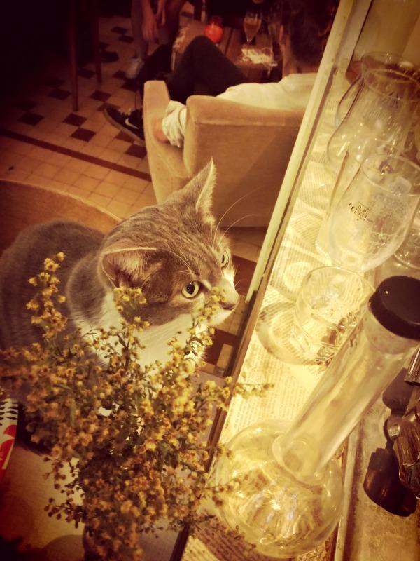 katten poezen