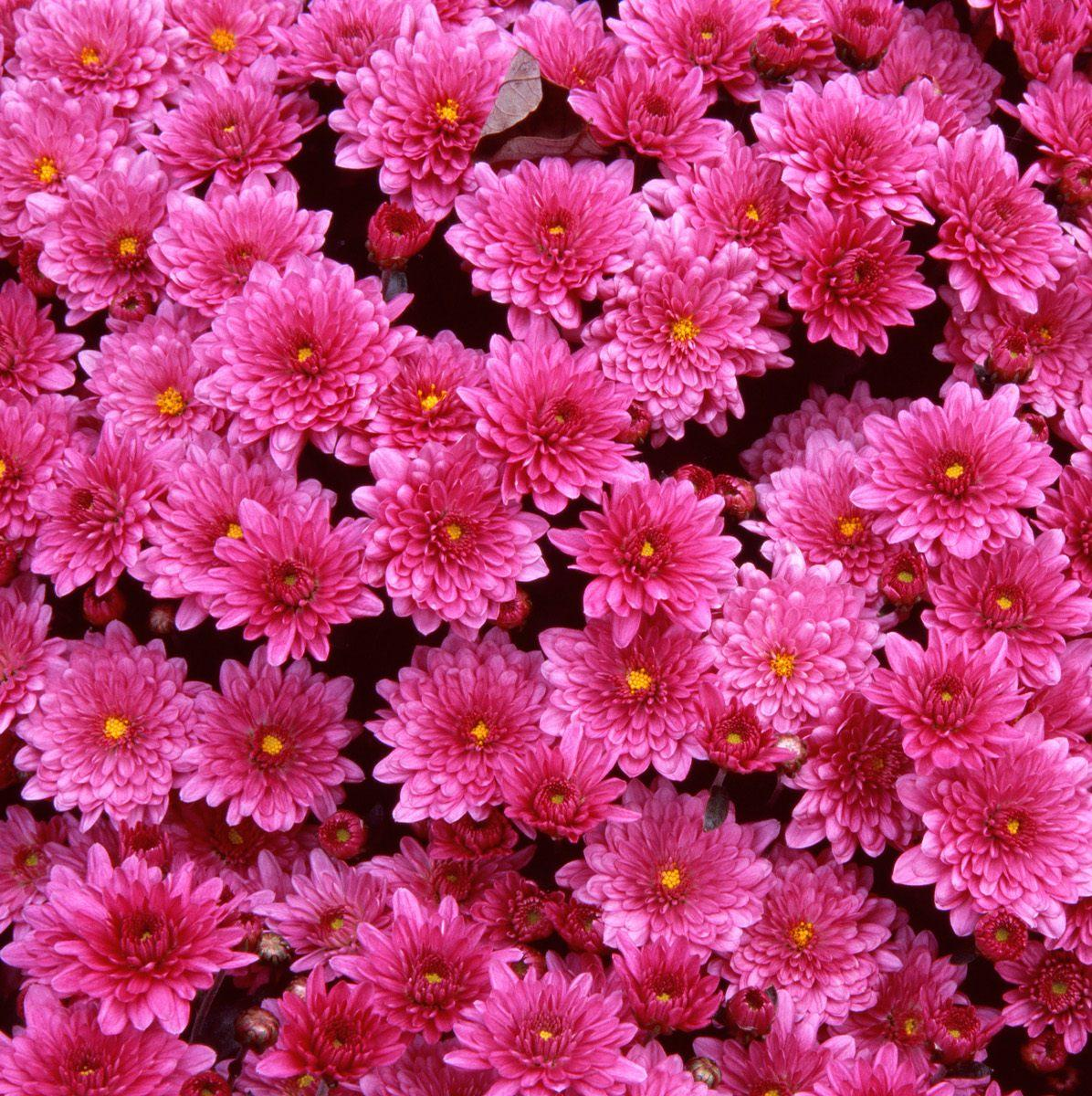Download Wallpapers free: Beautiful flowers wallpaper