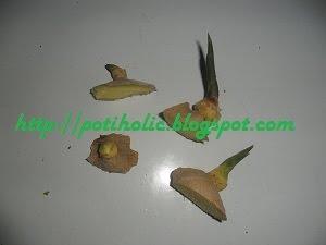 brotes de jengibre listos para ser plantados en semillero