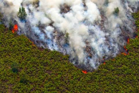 Dana Reboisasi kini dipakai support kegiatan pencegahan kebakaran hutan