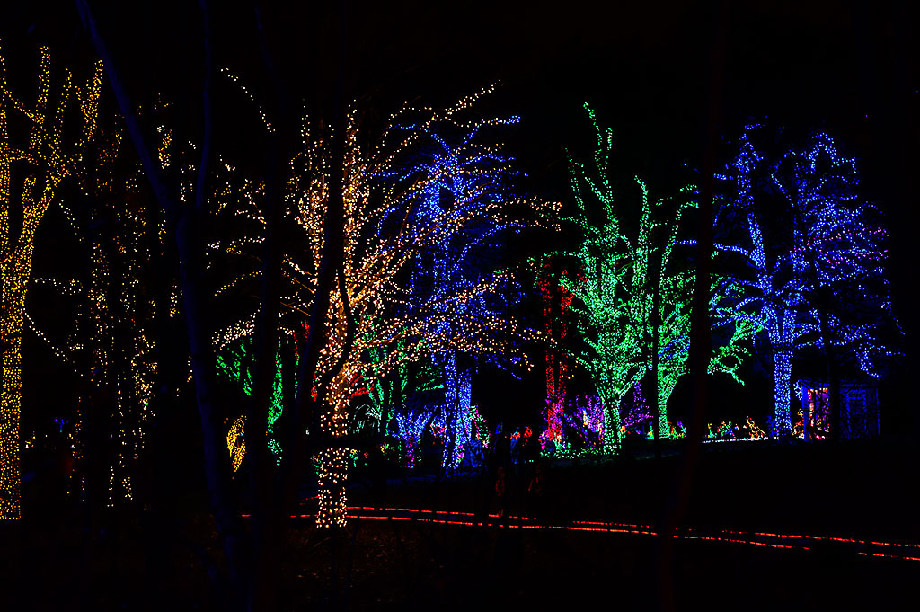 Winter Walk of Lights