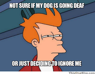 Why Is My Dog Deaf?