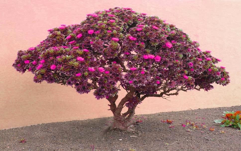 pink-flower-image