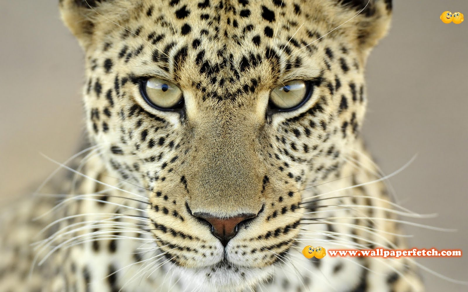 Wallpaper Fetch: Beautiful Animals HD Wallpapers Pack 1