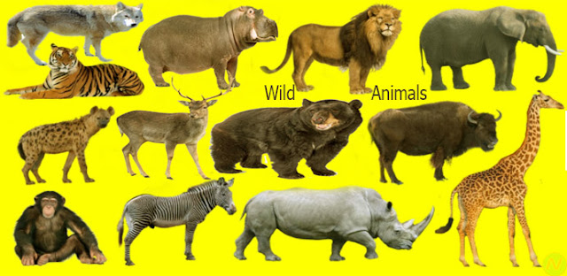 wild animals name