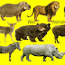 Learn 40 Wild animals Name with Relevant Necessary Vocabulary & Pictures