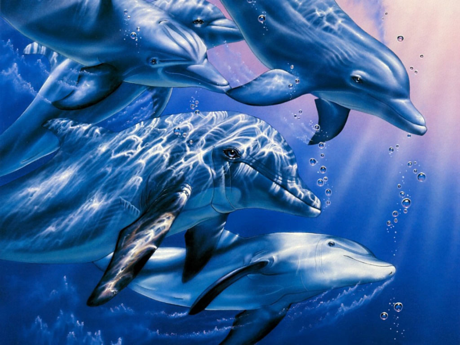 HD Wallpapers: Beautiful Dolphins HD Wallpapers 1600x1200
