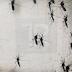 Virus Zika: Mangsa Tempatan Pertama Di Sabah