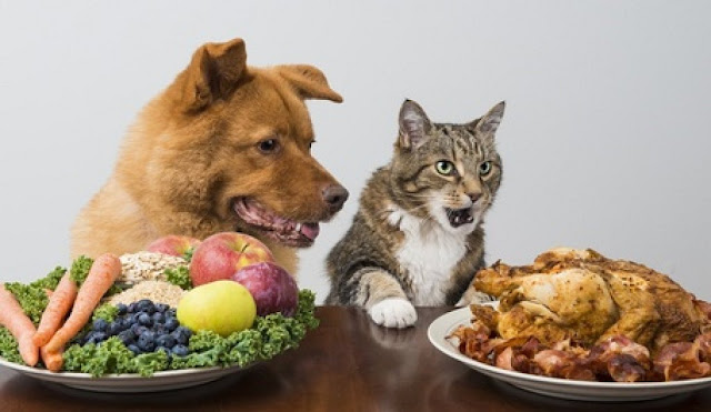 Can My Dog Eat This? A List of Human Foods Dogs Can and Can't Eat