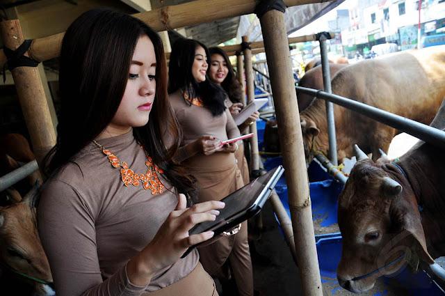 SPG Cantik mall hewan kurban di kawasan Kelapa Dua, Depok (Photo:Kaskus)