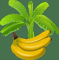 Eat Banana at night good are bad