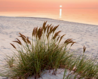 Phoenix II Vacation Rental in Orange Beach