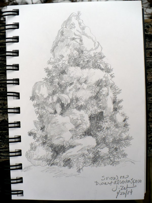 Dwarf Alberta Spruce in snow pencil sketch