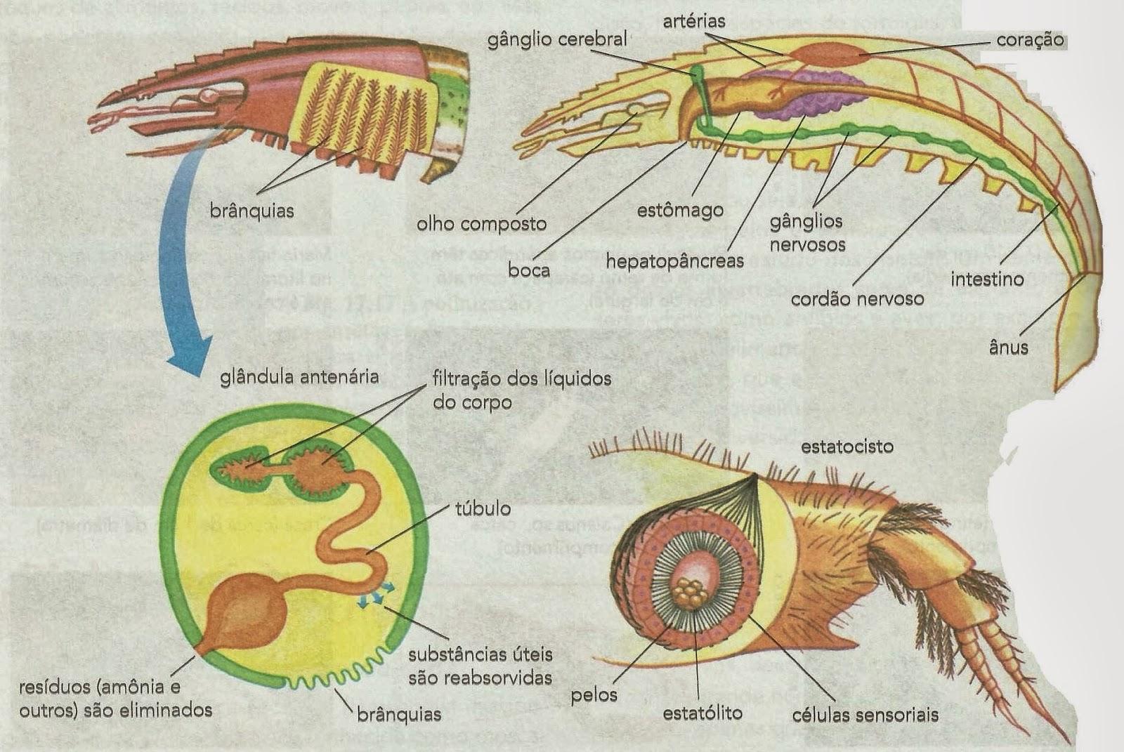 A metamorfose na teoria da psicologia da saúde e psicologia psicoterápica humanismo existencial 8