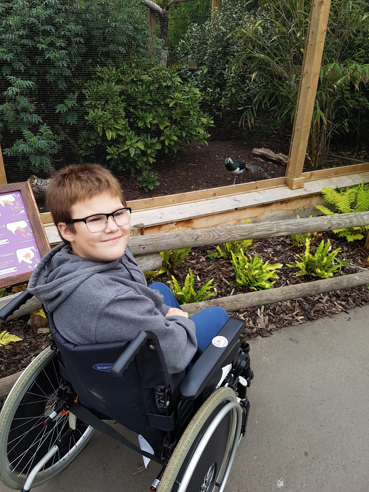 Ben in his wheelchair smiling at the camera with an enclosure behind (no animals can be seen) showing he can see even in his wheelchair.